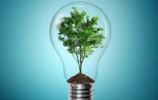 light bulb with a tree inside - lightstyleoftampabay
